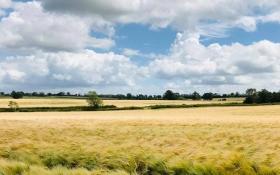 barley_fields_plumpton_lane