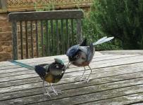birthday_birds